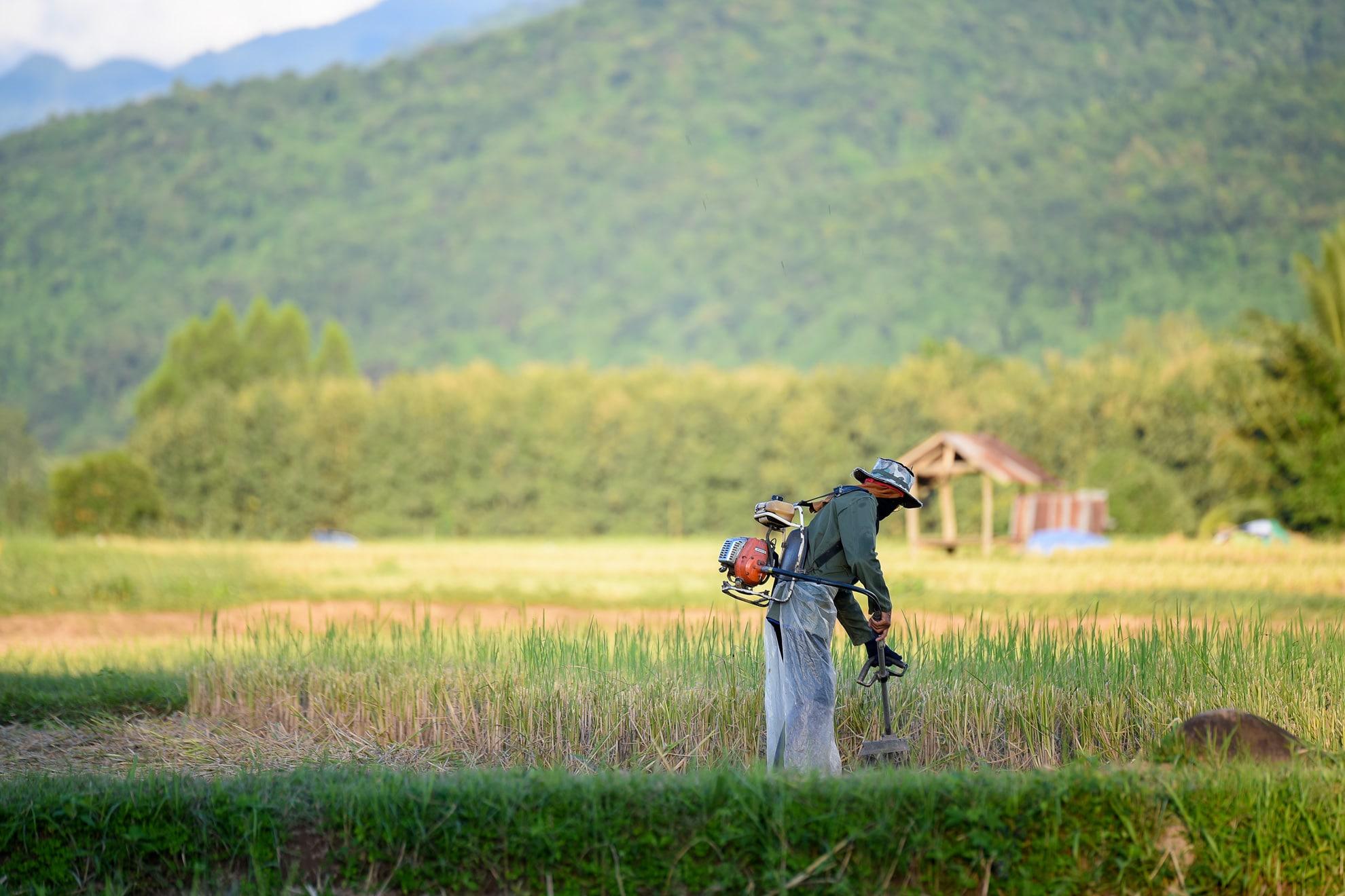Homme entretien espaces verts de dos