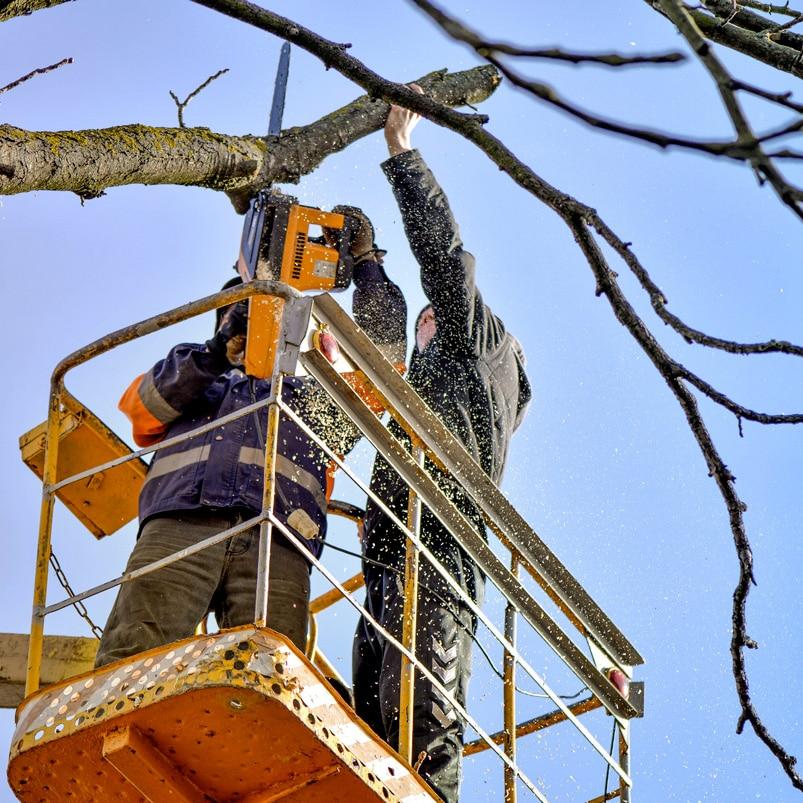 2 hommes elaguent arbre depuis une nacelle