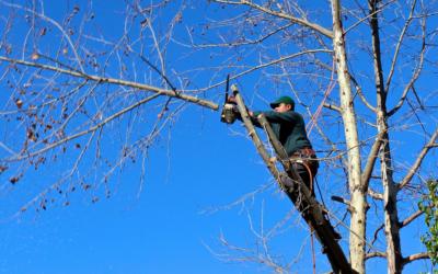 Élagage : Le Transit entretient et prend soin de vos arbres